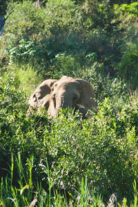 Nature from Africa Photograph 244