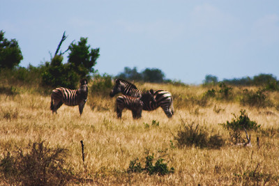 Nature from Africa Photograph 221