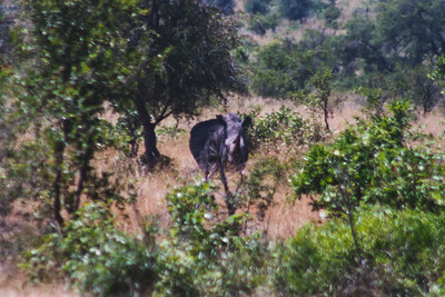 Nature from Africa Photograph 222