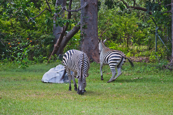 Nature from Africa Photograph 467