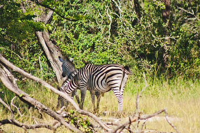 Nature from Africa Photograph 437