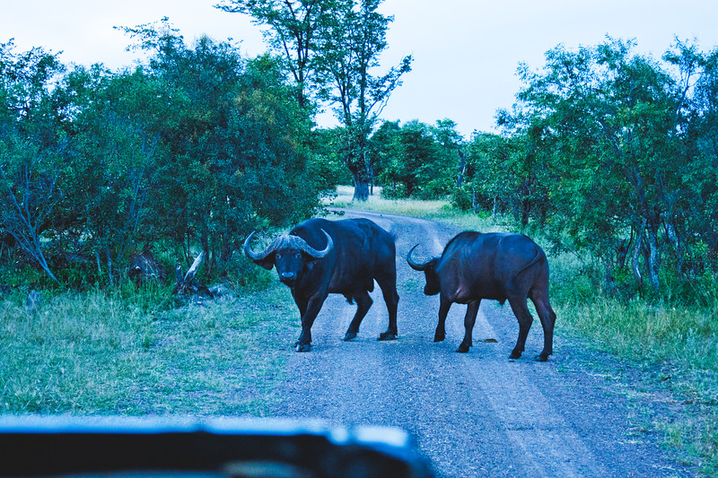 Nature from Africa Photograph 453