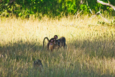 Nature from Africa Photograph 445