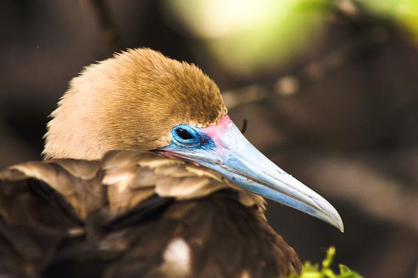 Tired Bird : Journey into Genovesa Island in the Galapagos Archipelago