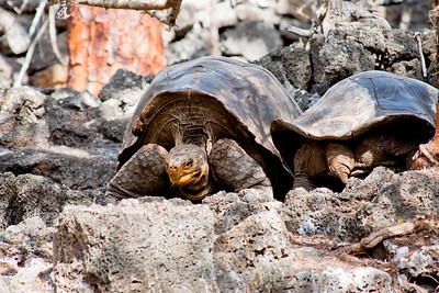 Day 7 Journey into Galapagos Photograph 3