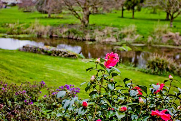 Blarney Castle Photograph 31