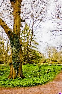 Blarney Castle Photograph 22