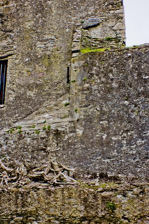 Blarney Castle Photograph 15