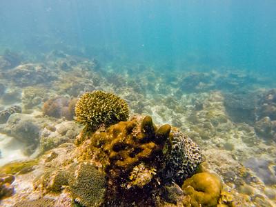 Dive in El Nido Series 4 Photograph 12