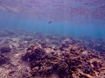 Dive in El Nido Series 2 Photograph 26