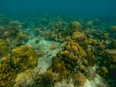Dive in El Nido Series 2 Photograph 76