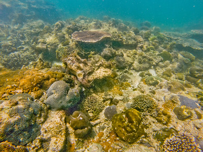 Dive in El Nido Series 4 Photograph 14