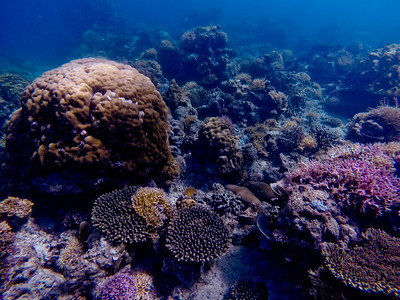 Dive in El Nido Series 2 Photograph 65