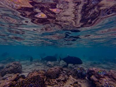 Dive in El Nido Series 2 Photograph 6
