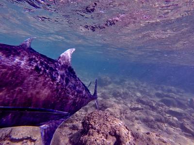 Dive in El Nido Series 2 Photograph 49