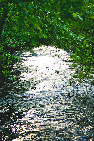 Nature from Michigan in 2006 Photograph 2