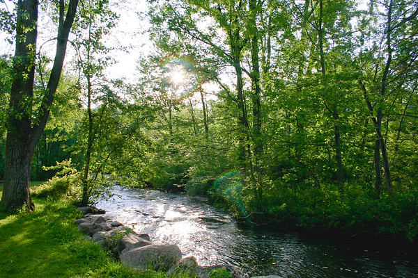Nature from Michigan in 2006 Photograph 3