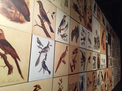 Charles Darwin Exhibit / Parque Chapultepec