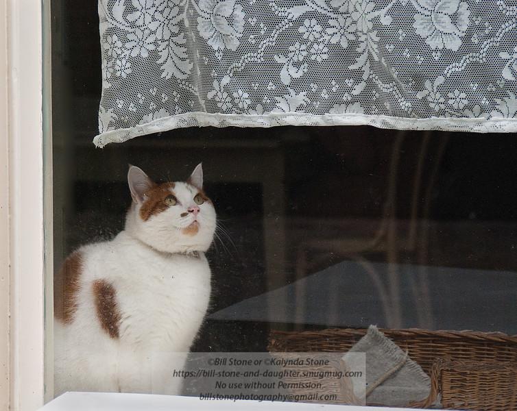 Cat in the Window - Amsterdam