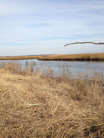 Bombay Hook Wildlife Refuge - December
