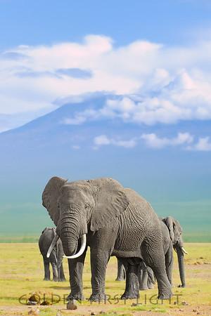 African Elephant and Kilimanjaro, Kenya