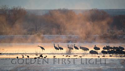 Sandhill Cranes, Bosque del Apache New Mexico