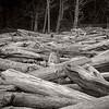 Drift Wood/ Ruby Beach