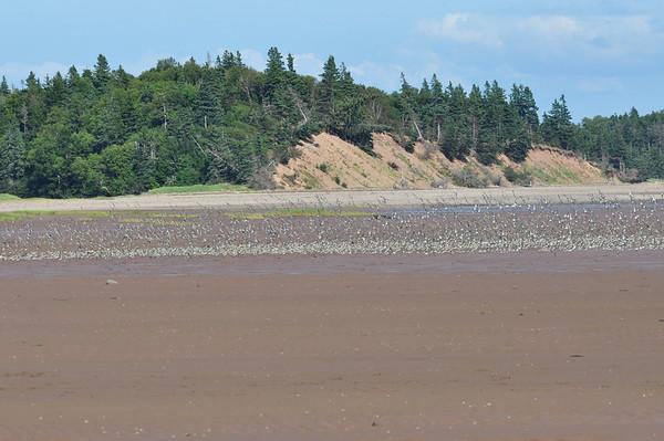St. Mary's Seashore, New Brunswick - Pam