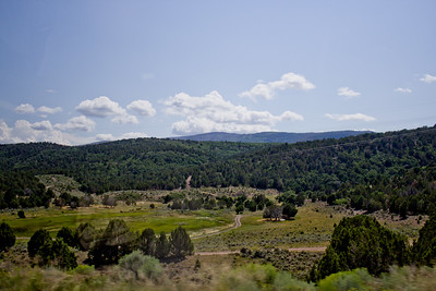 Forest Mountain Photograph 8
