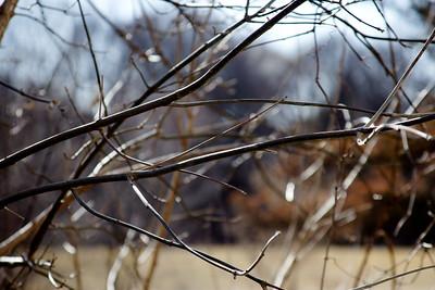 29 Sleeping Spring in Kearsley Park, Flint Michigan, USA