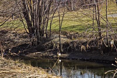 36 Sleeping Spring in Kearsley Park, Flint Michigan, USA