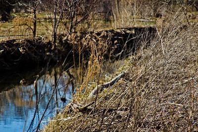 38 Sleeping Spring in Kearsley Park, Flint Michigan, USA