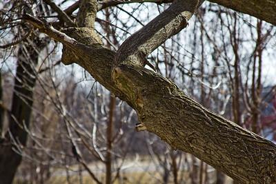28 Sleeping Spring in Kearsley Park, Flint Michigan, USA