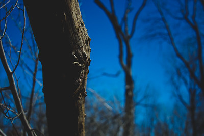 Genesee Recreational Area Sleeping Spring Photograph 57