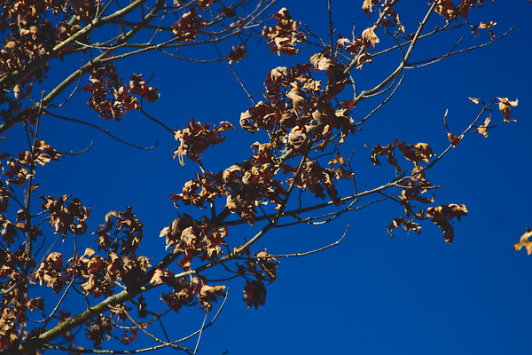 Genesee Recreational Area Sleeping Spring Photograph 33