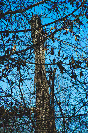 Genesee Recreational Area Sleeping Spring Photograph 30