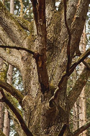 Richfield County Park Sleeping Spring 44