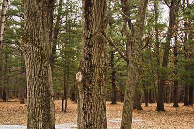 Richfield County Park Sleeping Spring 2