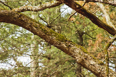 Richfield County Park Sleeping Spring 48