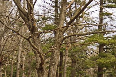 Richfield County Park Sleeping Spring 8