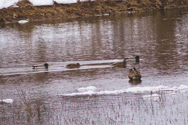 Wildlife in Stepping Stone Falls in Flint Michigan Photograph 31