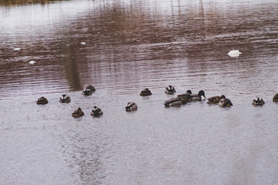 Wildlife in Stepping Stone Falls in Flint Michigan Photograph 26