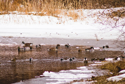 Wildlife in Stepping Stone Falls in Flint Michigan Photograph 4