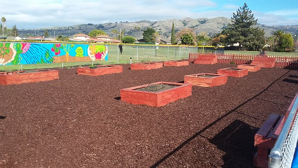 Community Garden Example