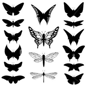 (I16) Butterflies