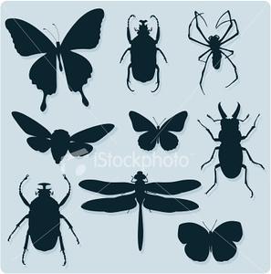 (I15) Nine Bugs