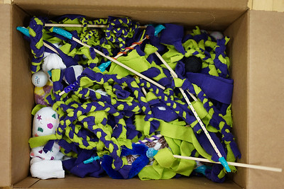 Volunteers made a box full of colorful toys for the cats and dogs at the APL.
