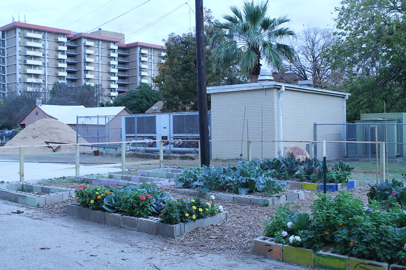 The ALA campus gardens prior to the installation of a school-colored fence line, December 2017