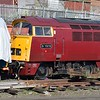 "Class 52 'Western' no. D1015 ""Western Champion"" at Kidderminster on the SVR."