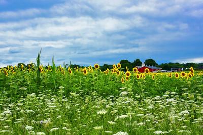 Country Farm Summer Landscape